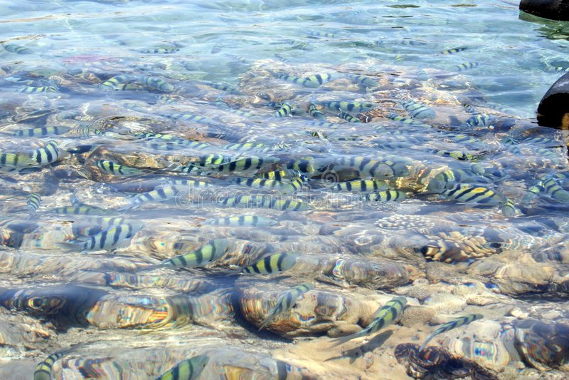 Rode Overzeese lagune stock foto