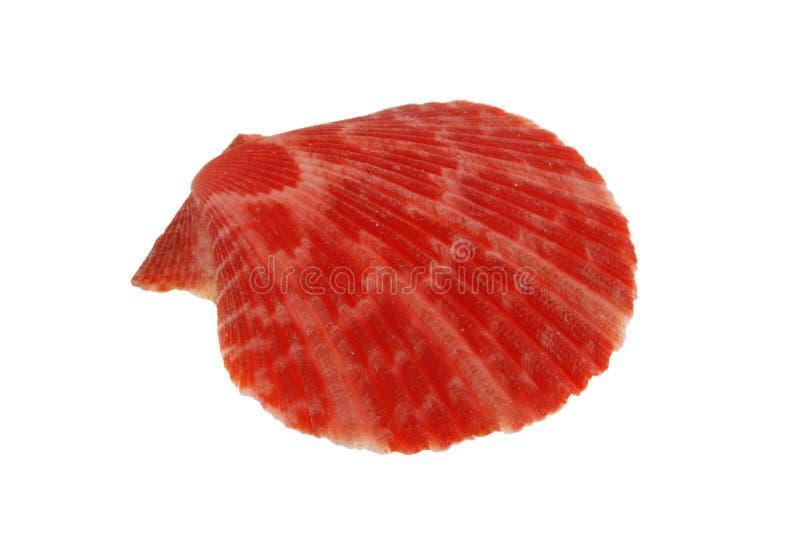 Rode overzeese shell royalty-vrije stock afbeelding