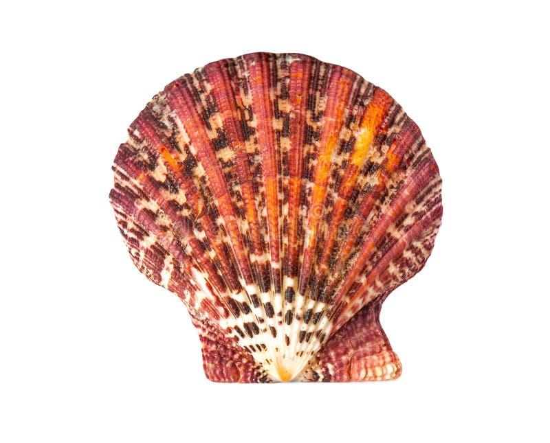 Rode overzeese shell op een witte achtergrond stock foto's