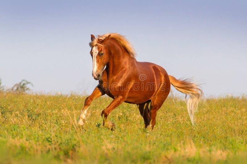 Rode paardlooppas stock afbeeldingen