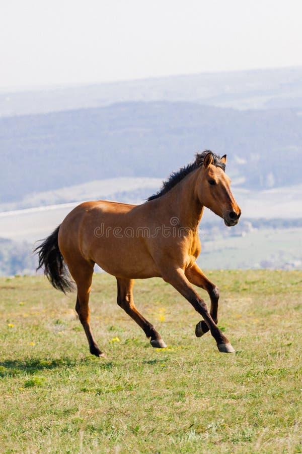 Rode paardlooppas op een groen gebied op wolkenachtergrond stock afbeeldingen