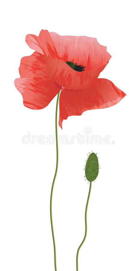 Rode papaver stock illustratie