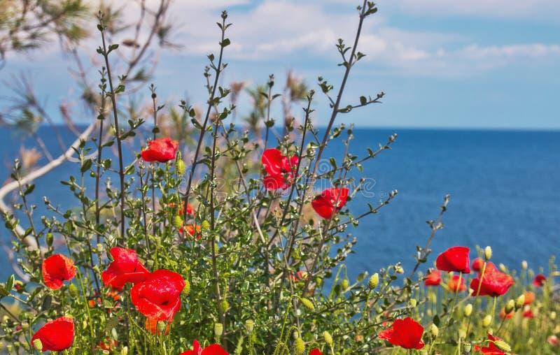 Rode papaver met Egeïsche overzeese mening, Thassos-eiland, Griekenland, wildflowers, rode papavers, papaver, rood, landschap, bl stock afbeelding