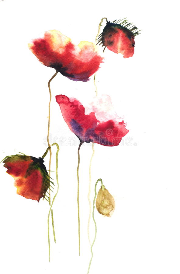 Rode papaverbloemen, waterverfillustrator stock illustratie