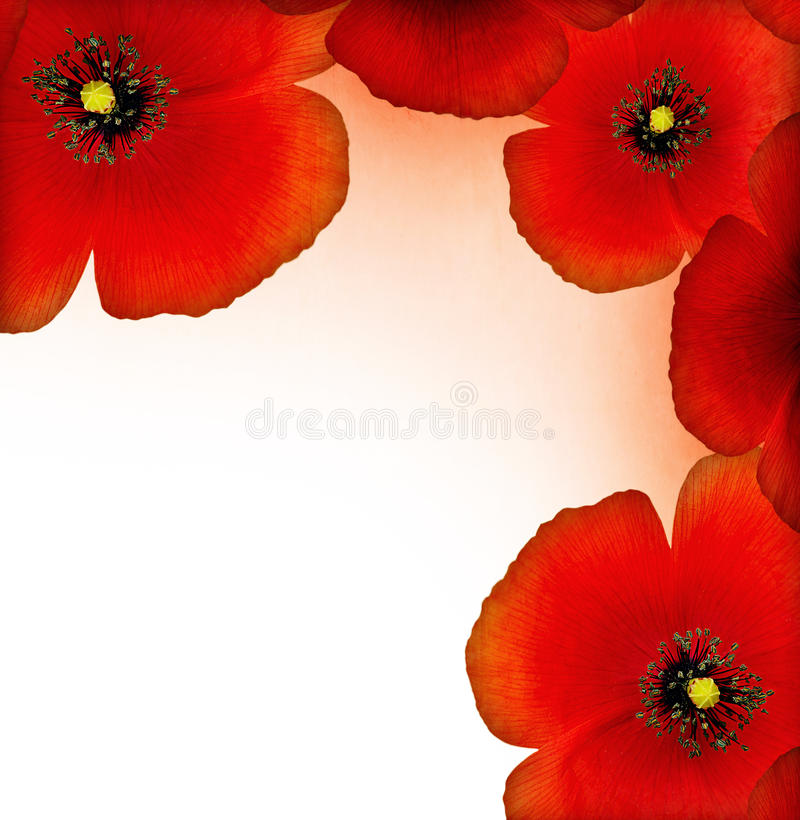 Rode papavergrens stock foto