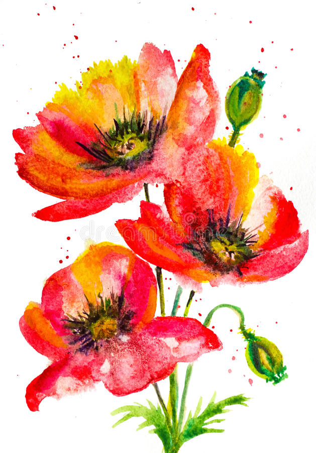 Rode papavers royalty-vrije illustratie