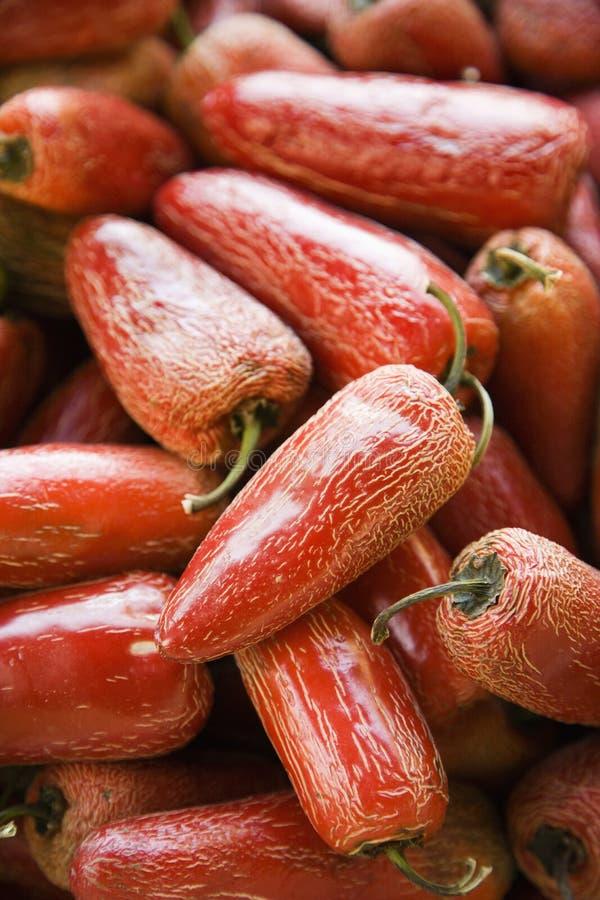 Rode peper Serrano. royalty-vrije stock afbeelding