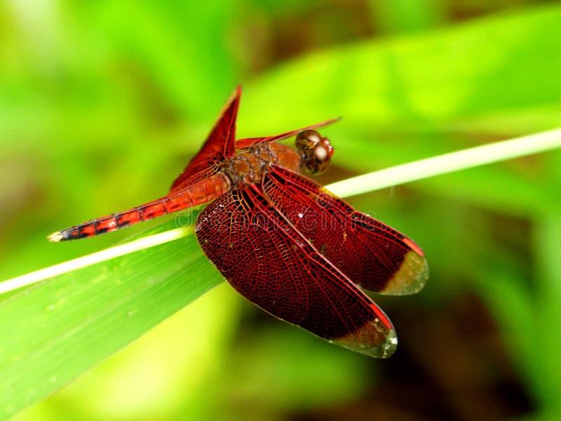 Rode pijl stock afbeelding