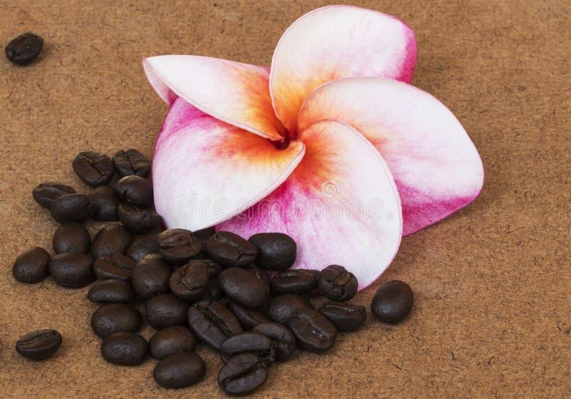 Rode Plumeria-bloem met koffie op houten achtergrond stock foto