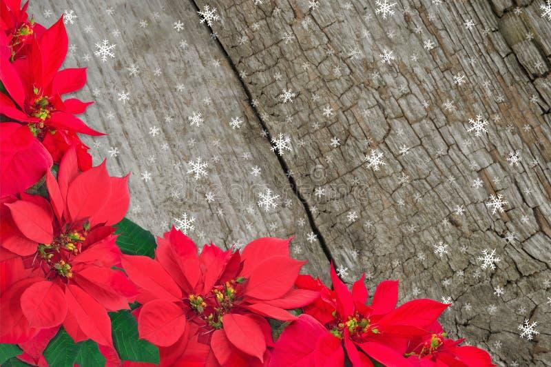 Rode poinsettia en sneeuw stock foto's