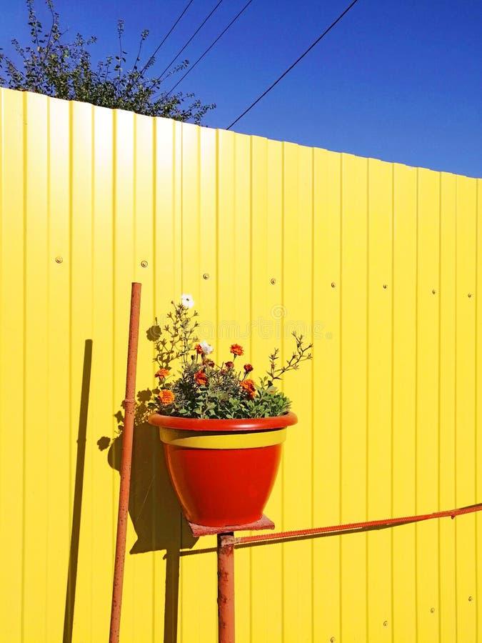 Rode pot met bloemen tegen de achtergrond van de gele omheining stock fotografie