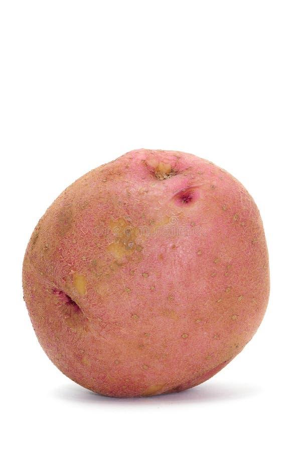 Rode potatoe stock fotografie