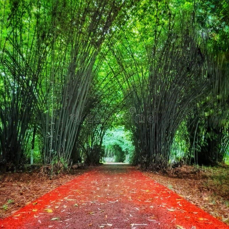 Rode renbaan door bamboebos stock fotografie