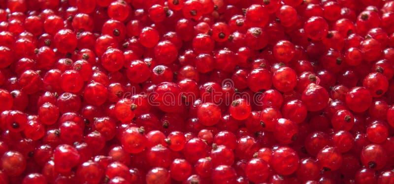 Rode rijpe en zoete hoogste de meningsachtergrond van besbessen stock afbeelding