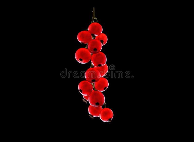 Rode rijpe sappige bes op zwarte achtergrond Zoete de zomerbessen Verse rode aalbes Close-up heldere rode aalbes royalty-vrije stock afbeelding