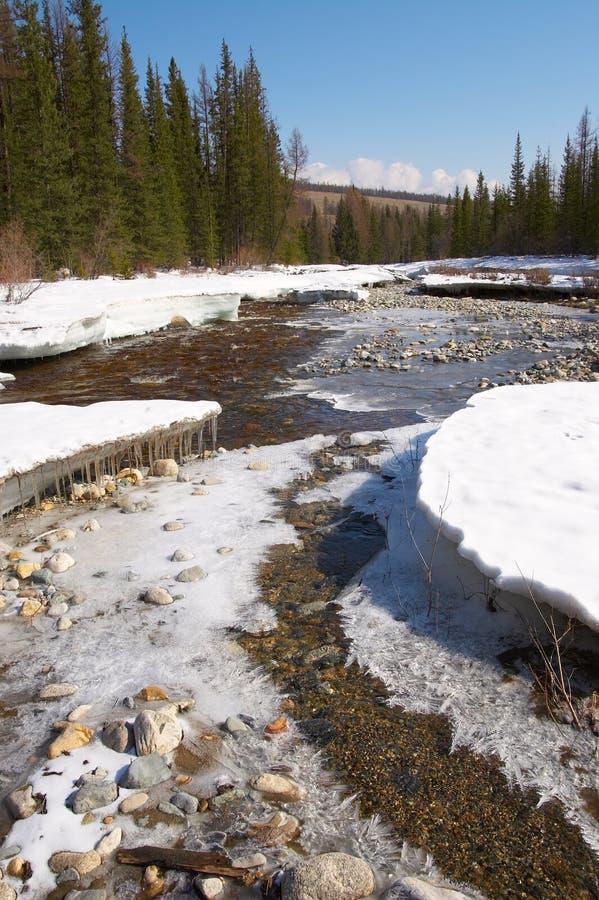 Rode rivier, wit ijs en groene sparren. stock fotografie