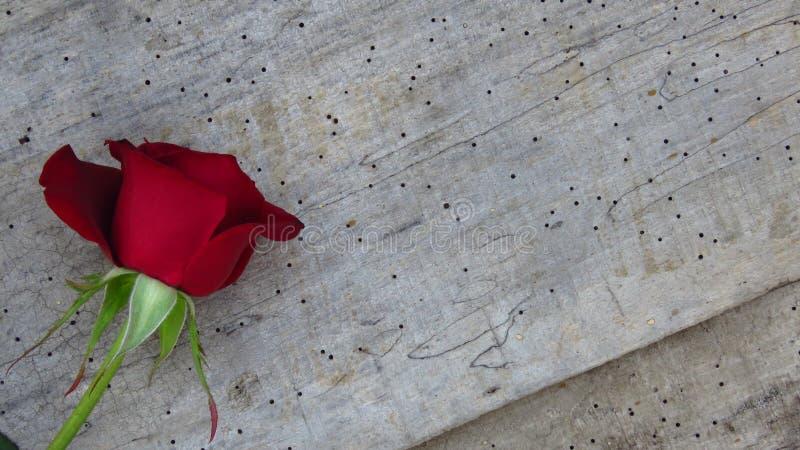 Rode Rose Flower op Houten Achtergrond op de Dag van Valentine ` s royalty-vrije stock afbeelding