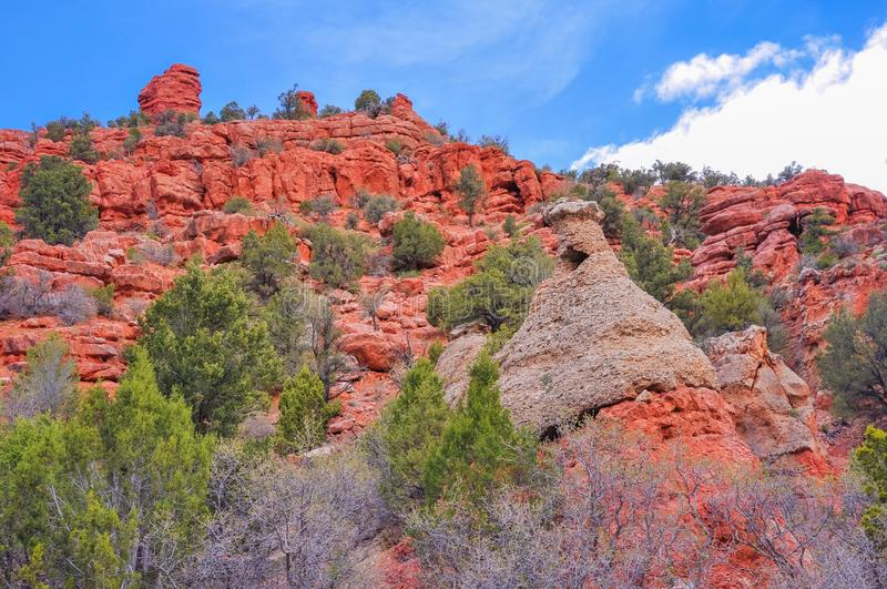 Rode Rotsklippen in Dixie National Forest stock afbeeldingen