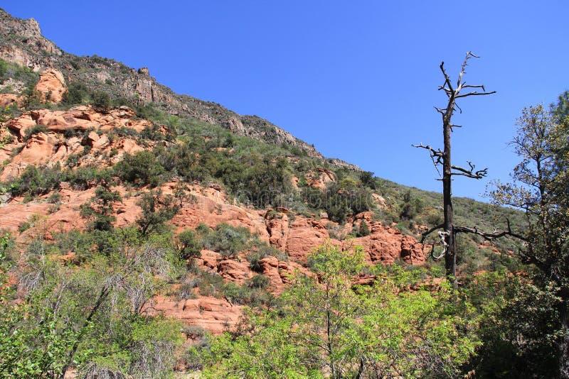 Rode Rotsvorming in Sedona Arizona stock afbeeldingen