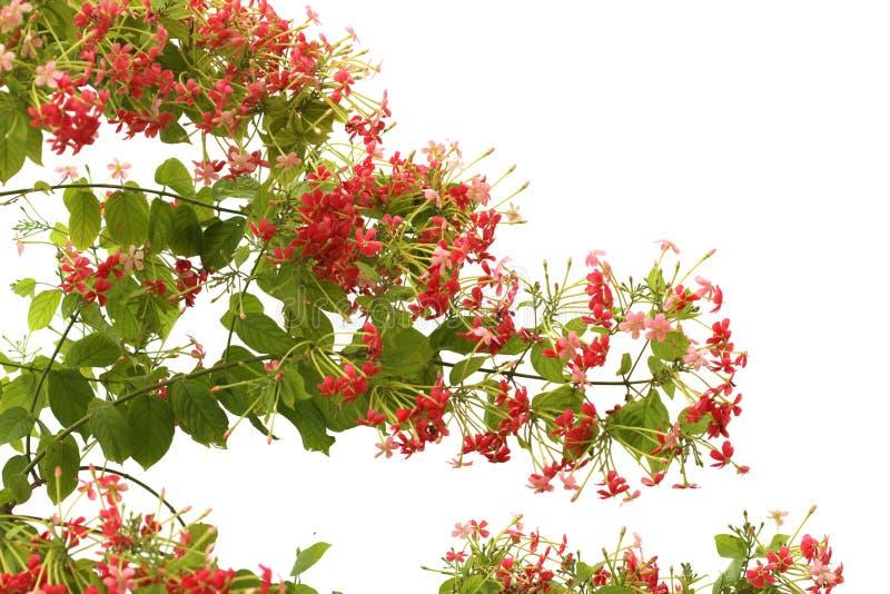 Rode roze bloem royalty-vrije stock fotografie