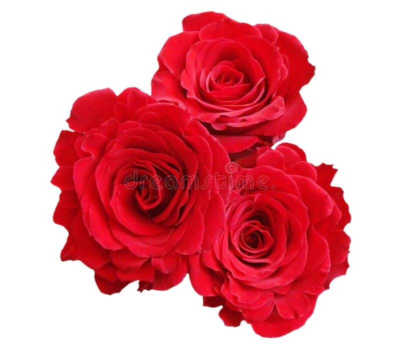 Rode rozen stock afbeelding