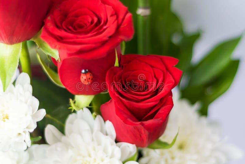 Rode rozen Bloemen als symbool van liefde royalty-vrije stock afbeelding