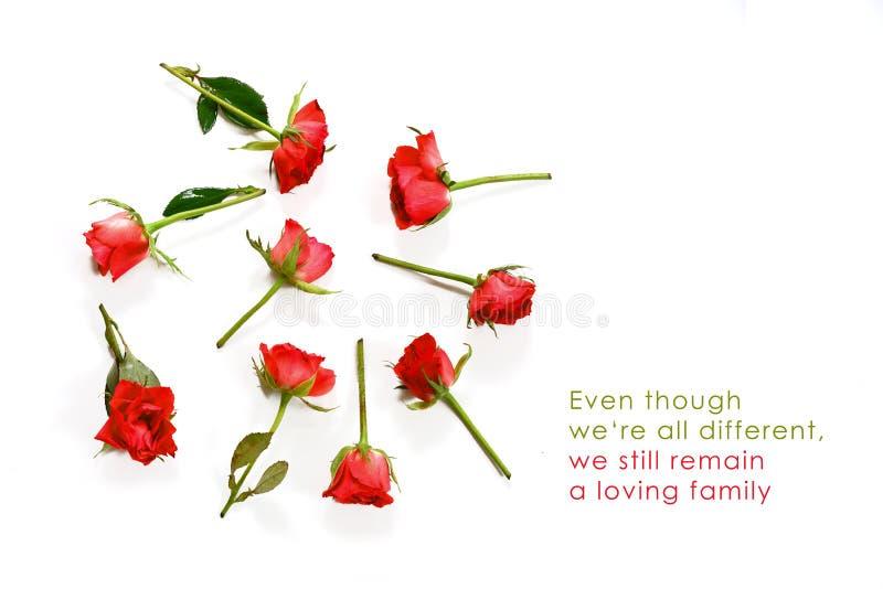 Rode rozen in een cirkel op een witte achtergrond met exemplaarruimte en steekproeftekst alhoewel we're verschillend allen, wij stock foto's