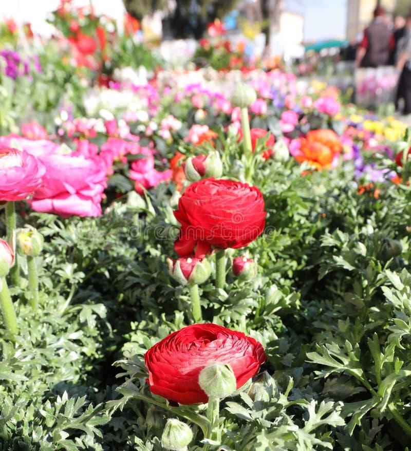 rode rozen en meer bloemenn lente voor verkoop bij bloemistwinkel royalty-vrije stock foto