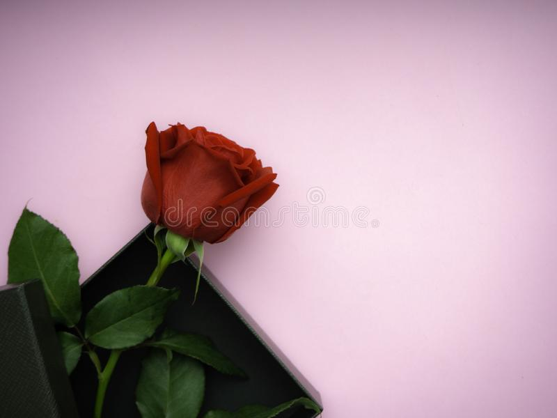 Rode rozen met giftvakje op roze document royalty-vrije stock afbeelding
