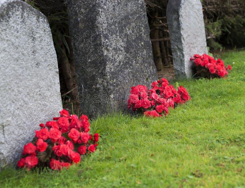 Rode rozen op kerkhof stock fotografie