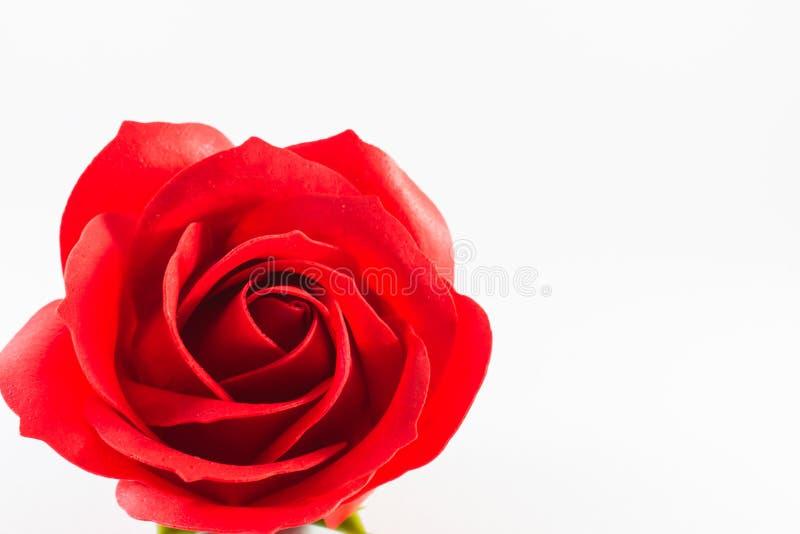 Rode rozen van kunstmatig met witte achtergrond Het concept van de liefde stock foto's