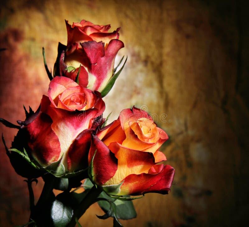 Rode rozenbloesems royalty-vrije stock afbeelding