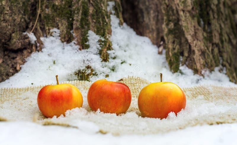 Rode sappige appelen onder een boom in de sneeuw Nuttige vitaminemaaltijd terwijl het lopen in woods_ royalty-vrije stock afbeelding