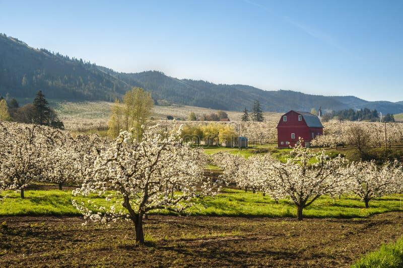 Rode schuur, appelboomgaarden stock foto