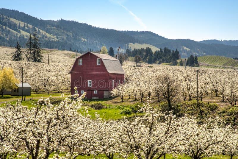 Rode schuur, appelboomgaarden stock foto's