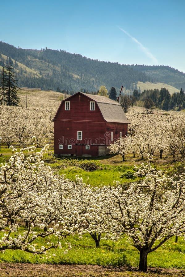 Rode schuur, appelboomgaarden royalty-vrije stock foto's