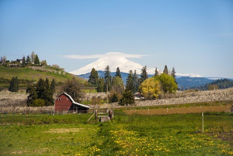 Rode schuur, appelboomgaarden, Mt. Adams royalty-vrije stock foto
