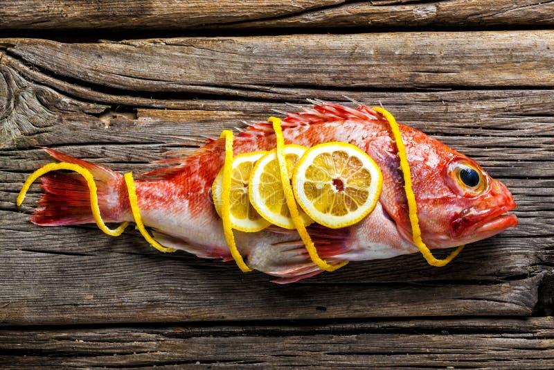 Rode Scorpionfish royalty-vrije stock fotografie