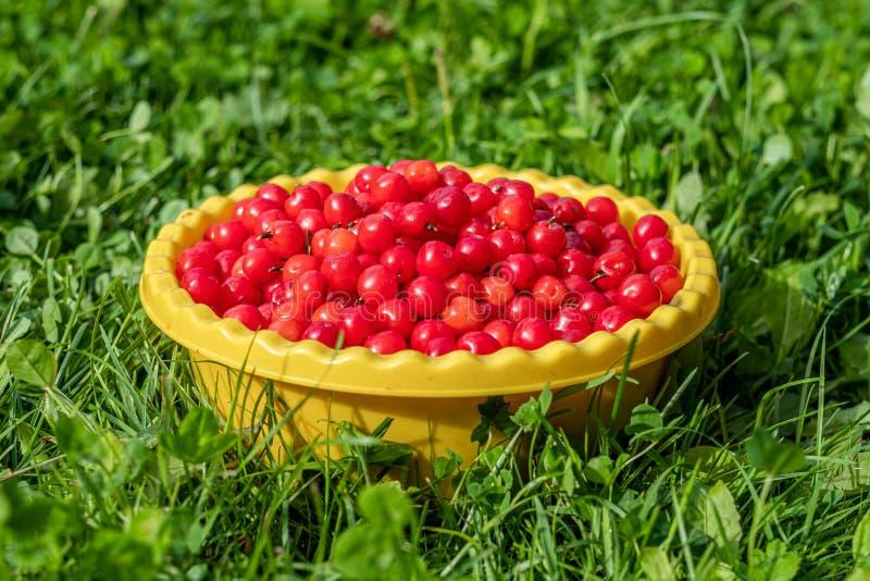 Rode smakelijke kers in een gele kom op het gras royalty-vrije stock foto's