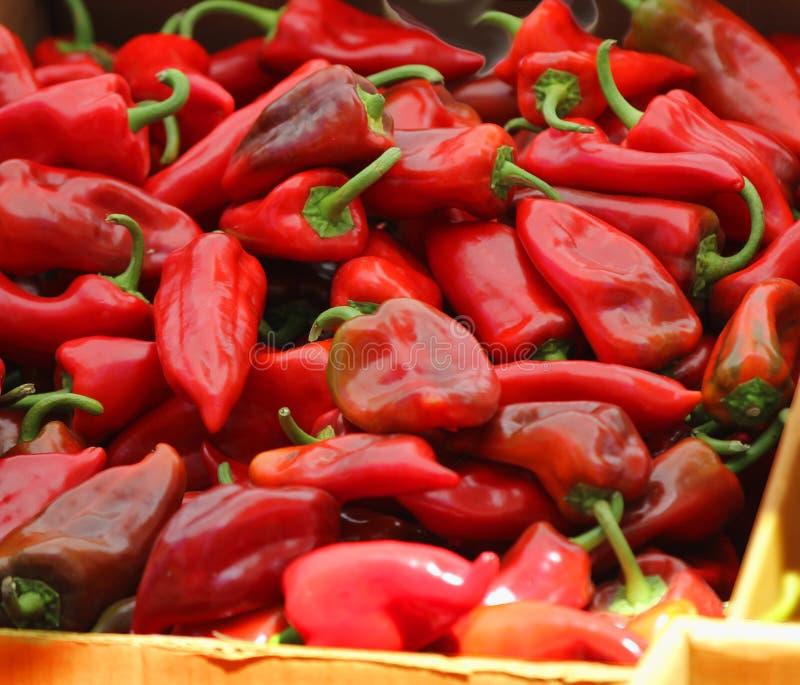 Rode Spaanse peperpeper bij de landbouwersmarkt. stock afbeelding