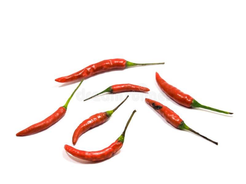 Rode Spaanse pepers met witte achtergrond stock foto's