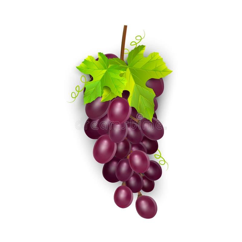 Rode tafeldruiven, wijndruiven Vers fruit, 3d vectorpictogramreeks Bos van druiven rijpe, vectoreps 10 royalty-vrije illustratie