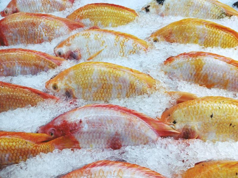 Rode tilapia vissen of Robijnrode vissen op ijs bij de supermarkt stock afbeeldingen