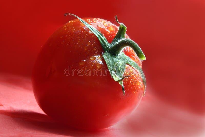 Rode Tomaat royalty-vrije stock foto