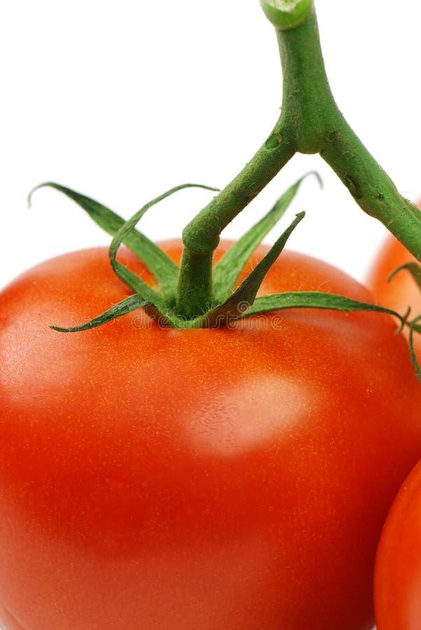 Rode tomaat met groene bladeren royalty-vrije stock afbeelding
