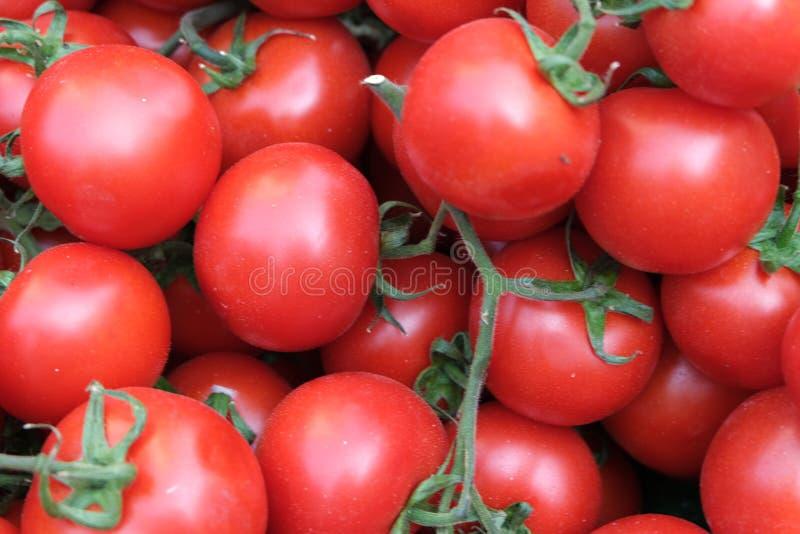 Rode Tomatenachtergrond Groep tomaten royalty-vrije stock foto