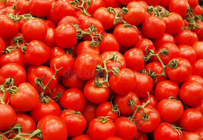 Rode tomates stock fotografie