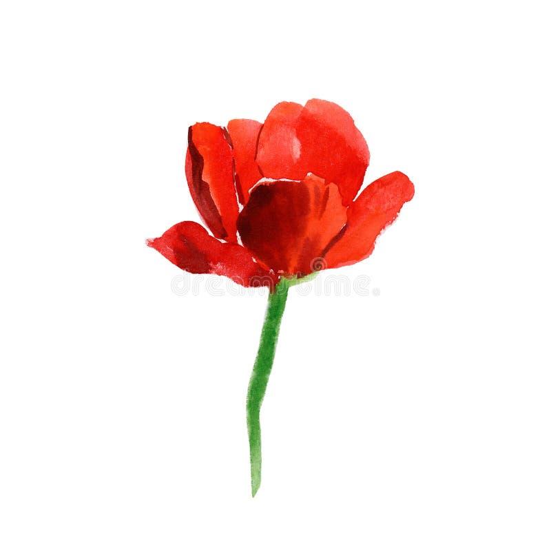 Rode tulp royalty-vrije illustratie