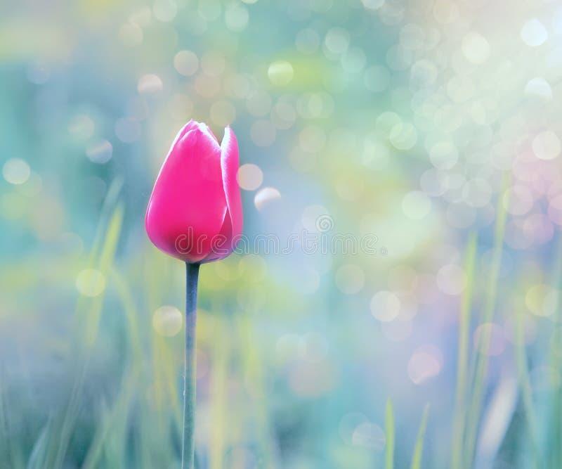 Rode tulp in groen gras in de lentetuin De tuin van de lente royalty-vrije stock fotografie