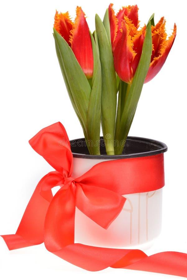 Rode tulpen in een pot die rond met rood lint wordt verpakt stock fotografie